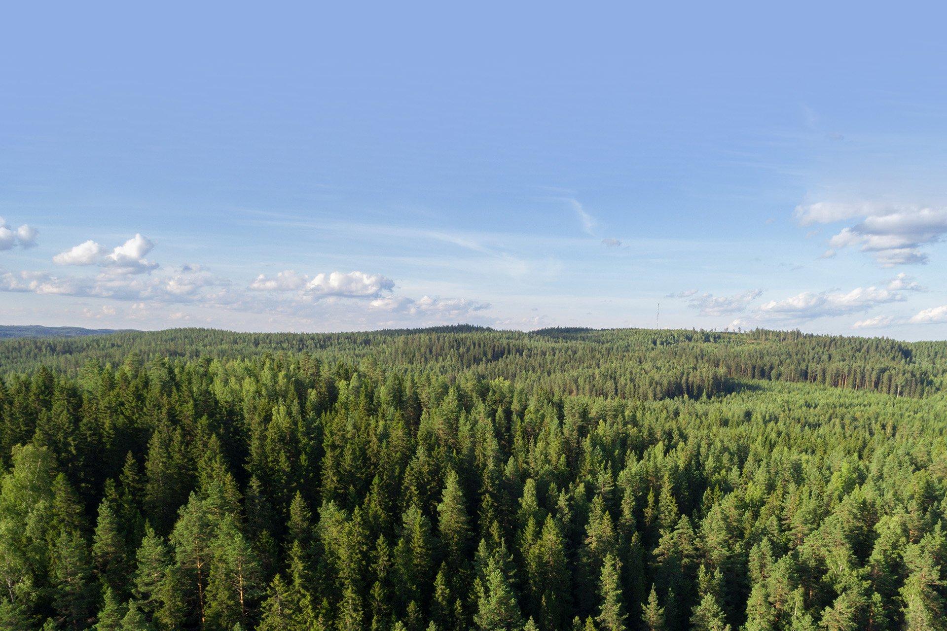 Pellopuu luontokuva metsämaisema