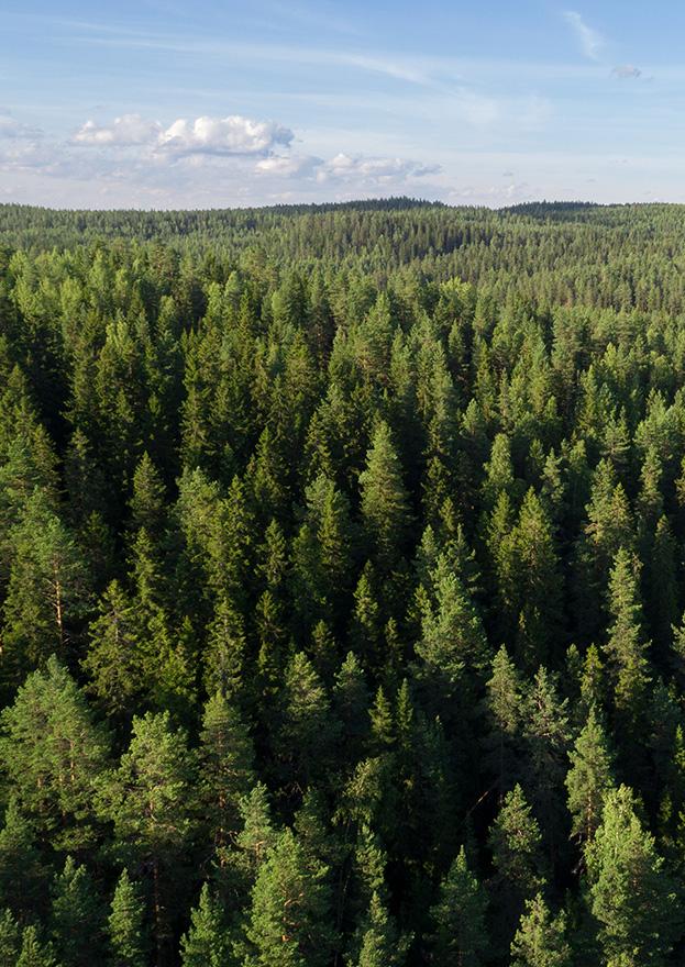 Pellopuu forest landscape