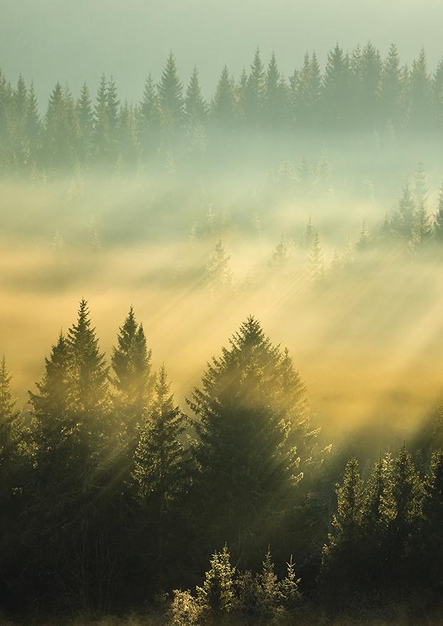 Pellopuu luontakuva metsämaisema pystykuva